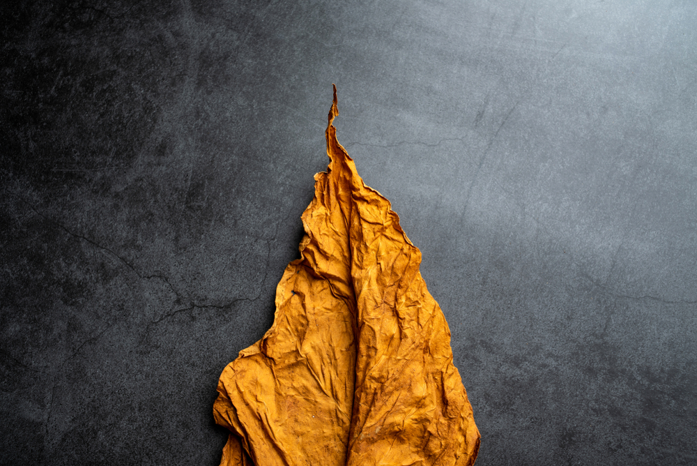 Tobacco Laws by Bill Frist MD